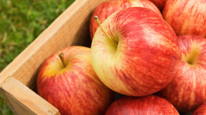 Beachbody Blog Guide to Apples