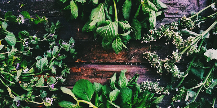 The Benefits of 7 Common Herbs