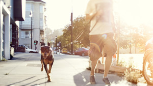 14 Unique Ways to Get Your 10,000 Steps In
